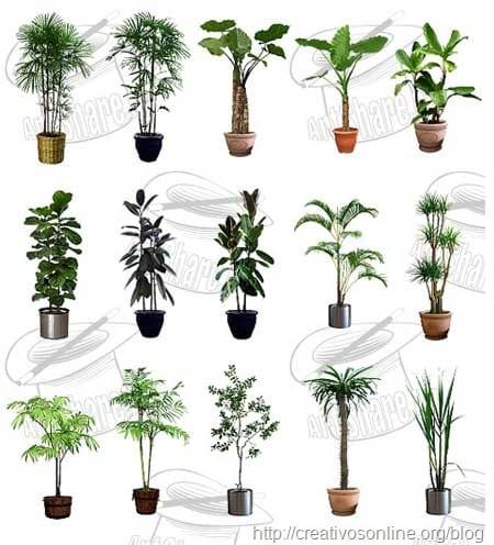 plantas__hogar_vectorizadas