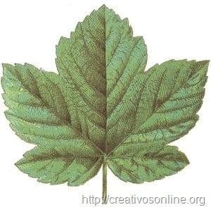Vector_Leaf_hoja_vectorizada_arbol