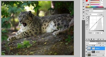 Tutorial Photoshop Como usar bien el contraste los niveles y el procesamiento de lotes