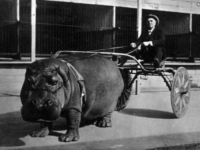 coche-hipopotamo