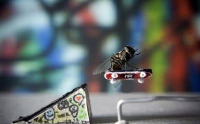 fly-skater