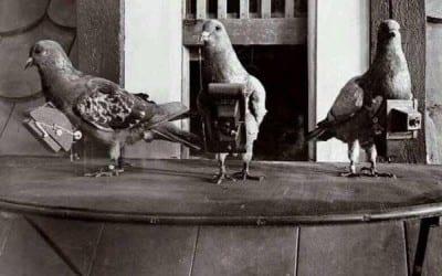 palomas-camaras