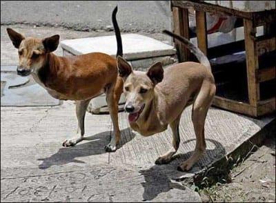 perros-sin-patas