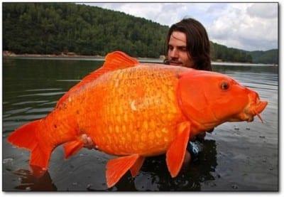 pez-gigante
