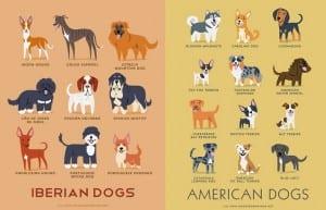 Perros del mundo Lili Chin
