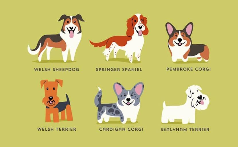 Perros del mundo