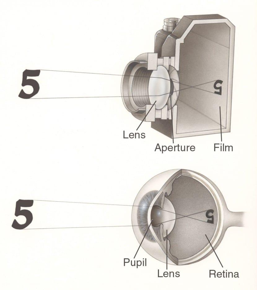 El-ojo-y-la-cámara-fotográfica-3