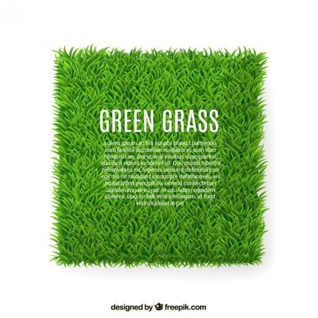 banner-de-la-hierba-verde_23-2147505962