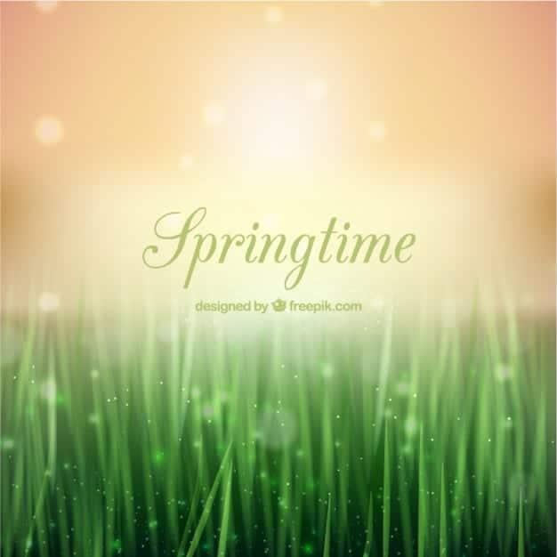 fondo-de-la-primavera-en-estilo-bokeh_23-2147507389