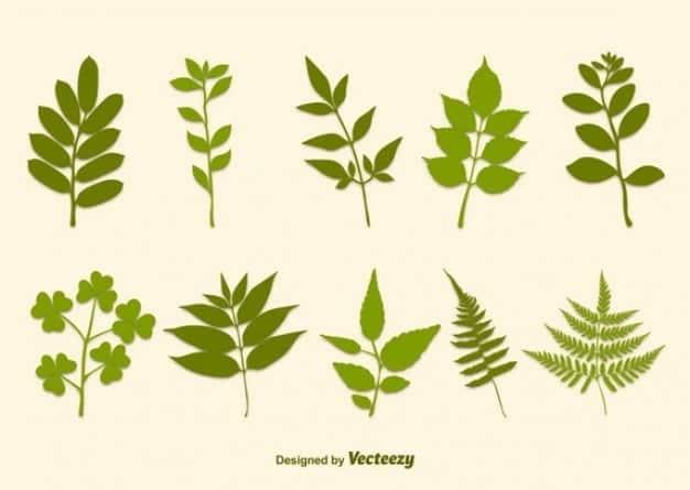 hojas-de-plantas-y-ramas-siluetas_62147507446