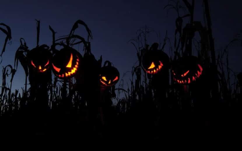 campo maiz calabazas miedo Halloween