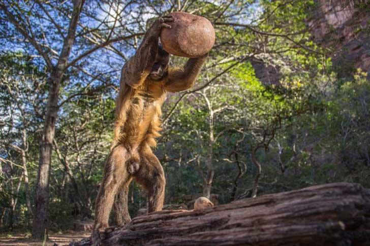 Mono capuccino brasil