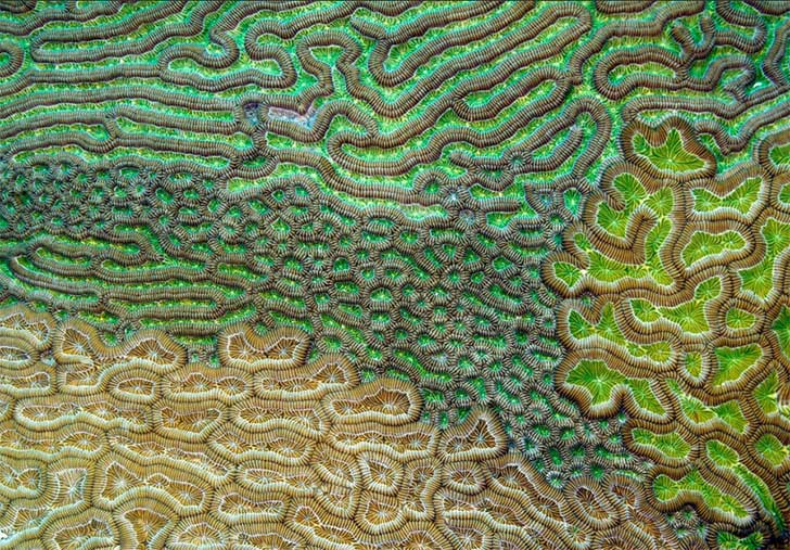 corales arrecifes