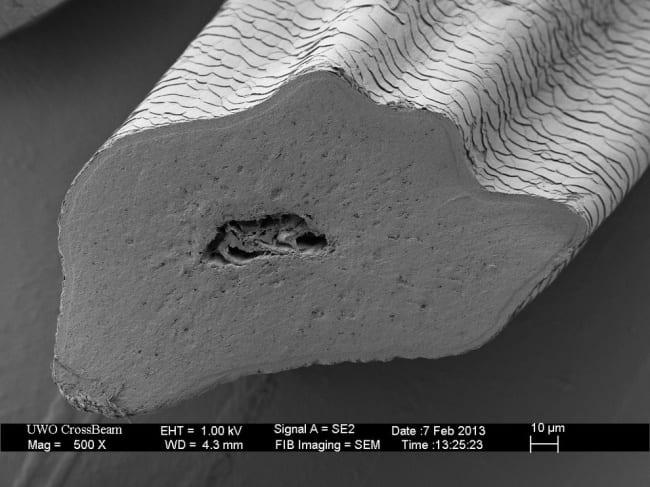 microscopio14