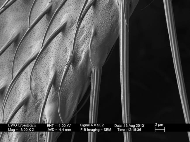 microscopio17