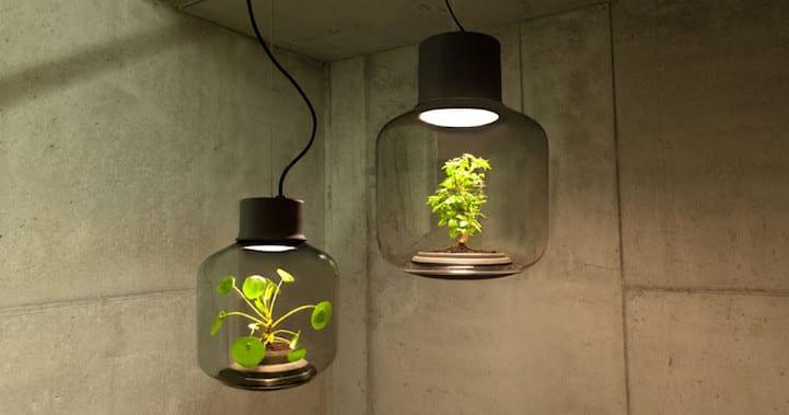 Lámpara planta