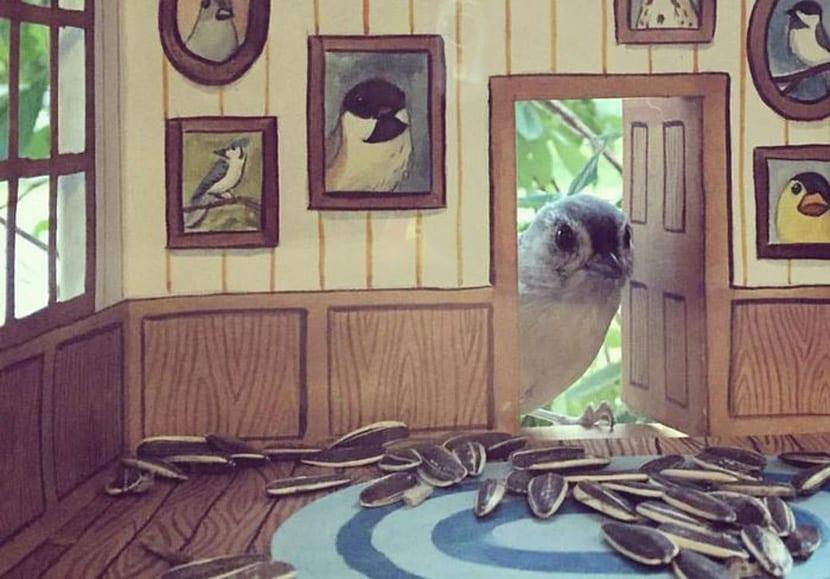 Casas pájaros