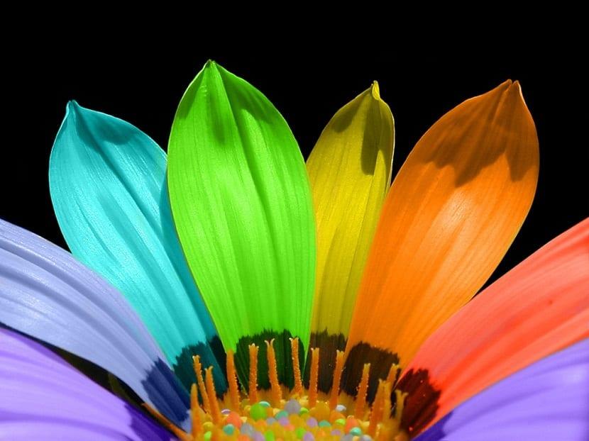 colores en el diseno