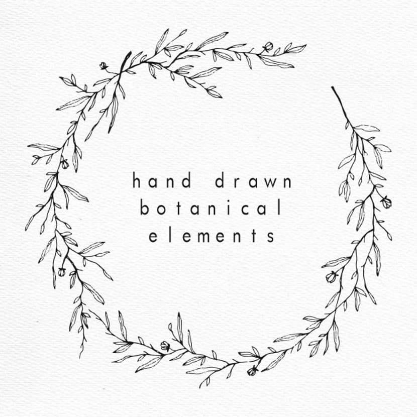 Elementos botánicos dibujados a mano
