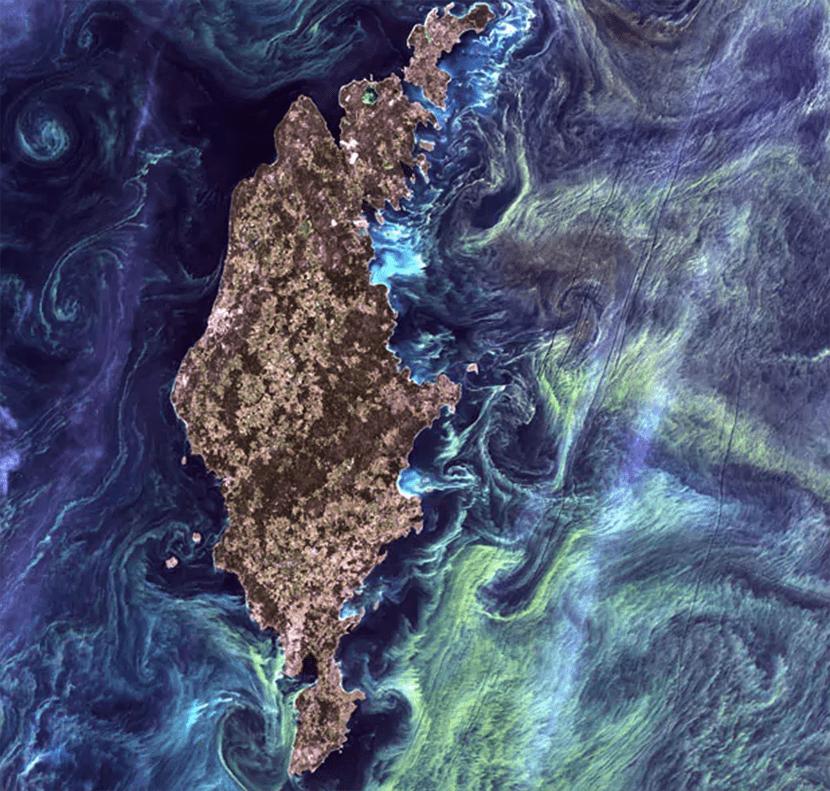 Fitoplancton en Gotland