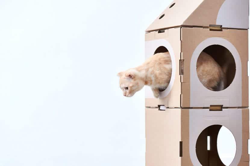 Gato jugando dentro del módulo de Cat Thing