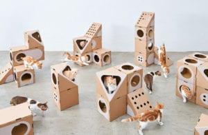 Formas de intercambiar los módulos de Cat Thing