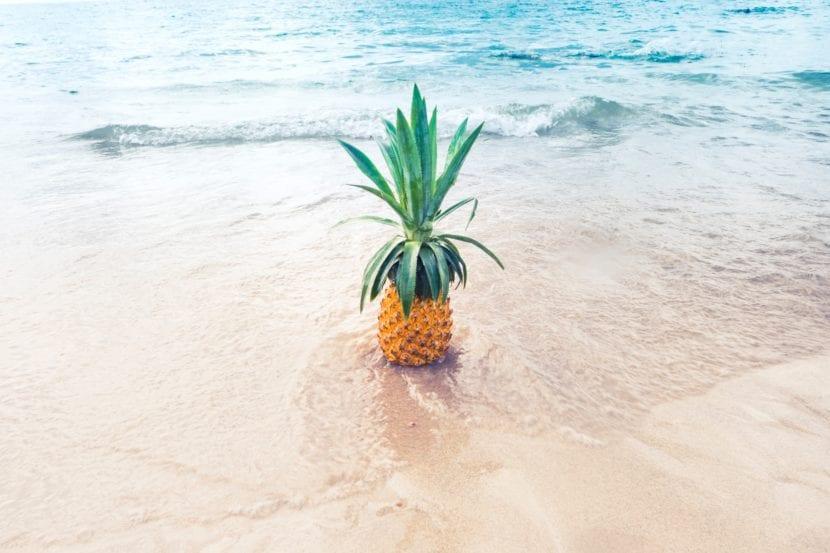 Inspiración imagen de mar, piña y playa