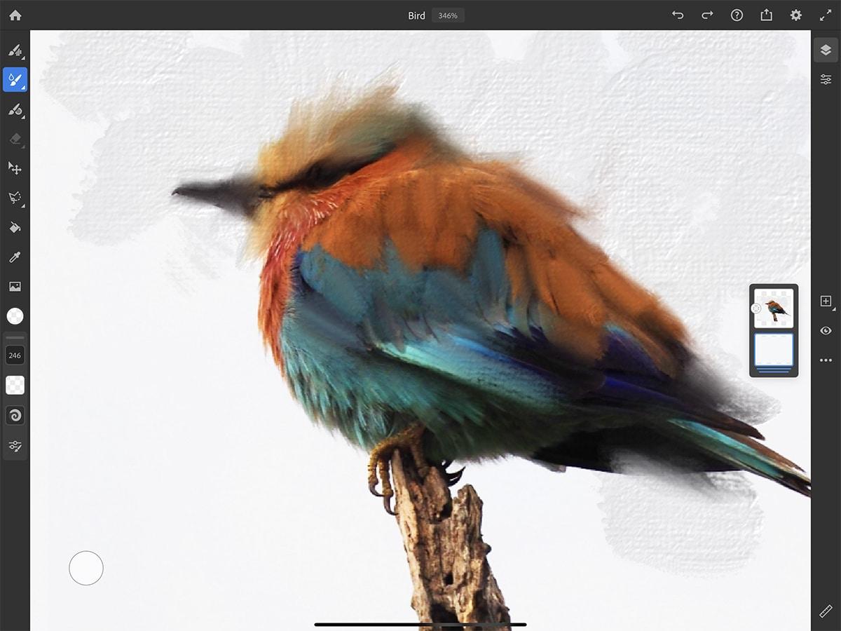 Pájaro con Adobe Fresco