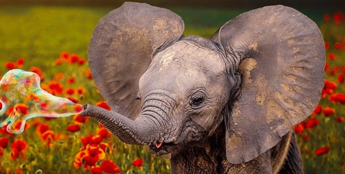 Creative Cloud actualizaciones