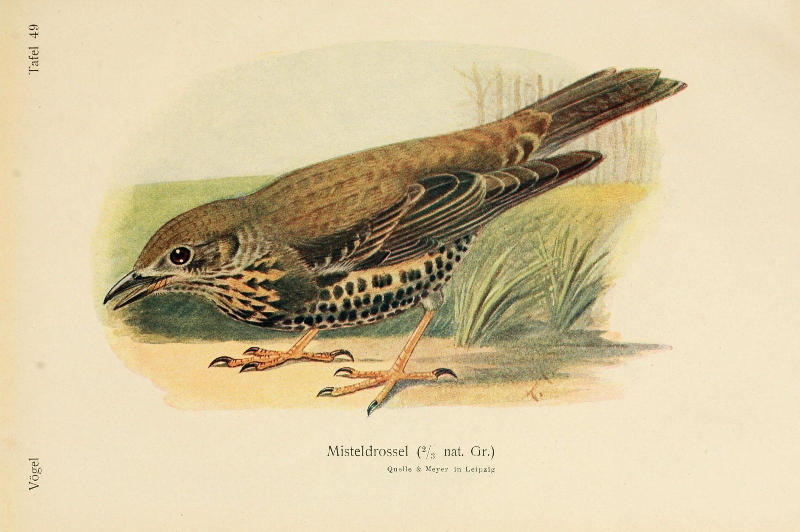Pájaro ilustrado