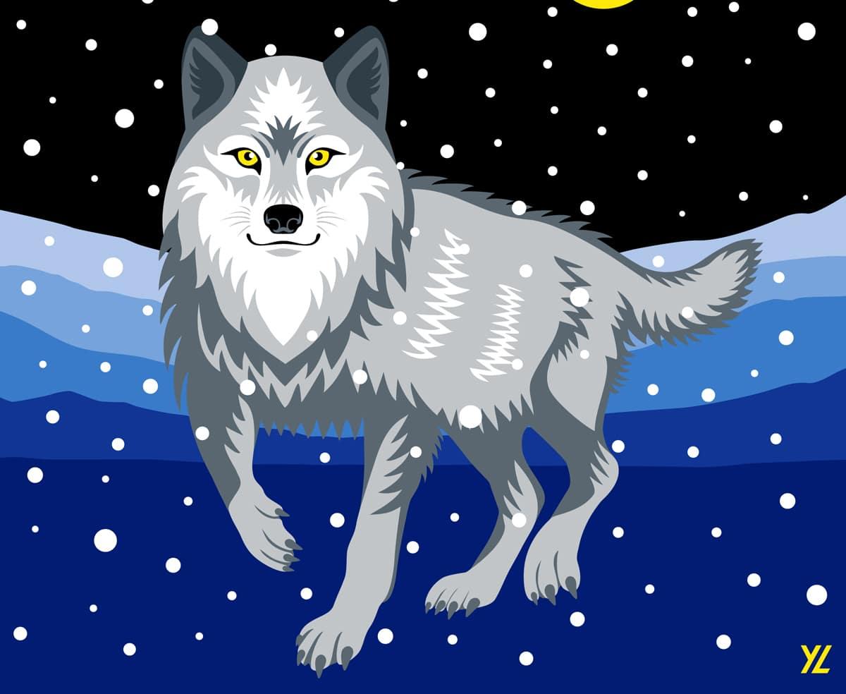 Lobo en Adobe Illustrator en el iPad