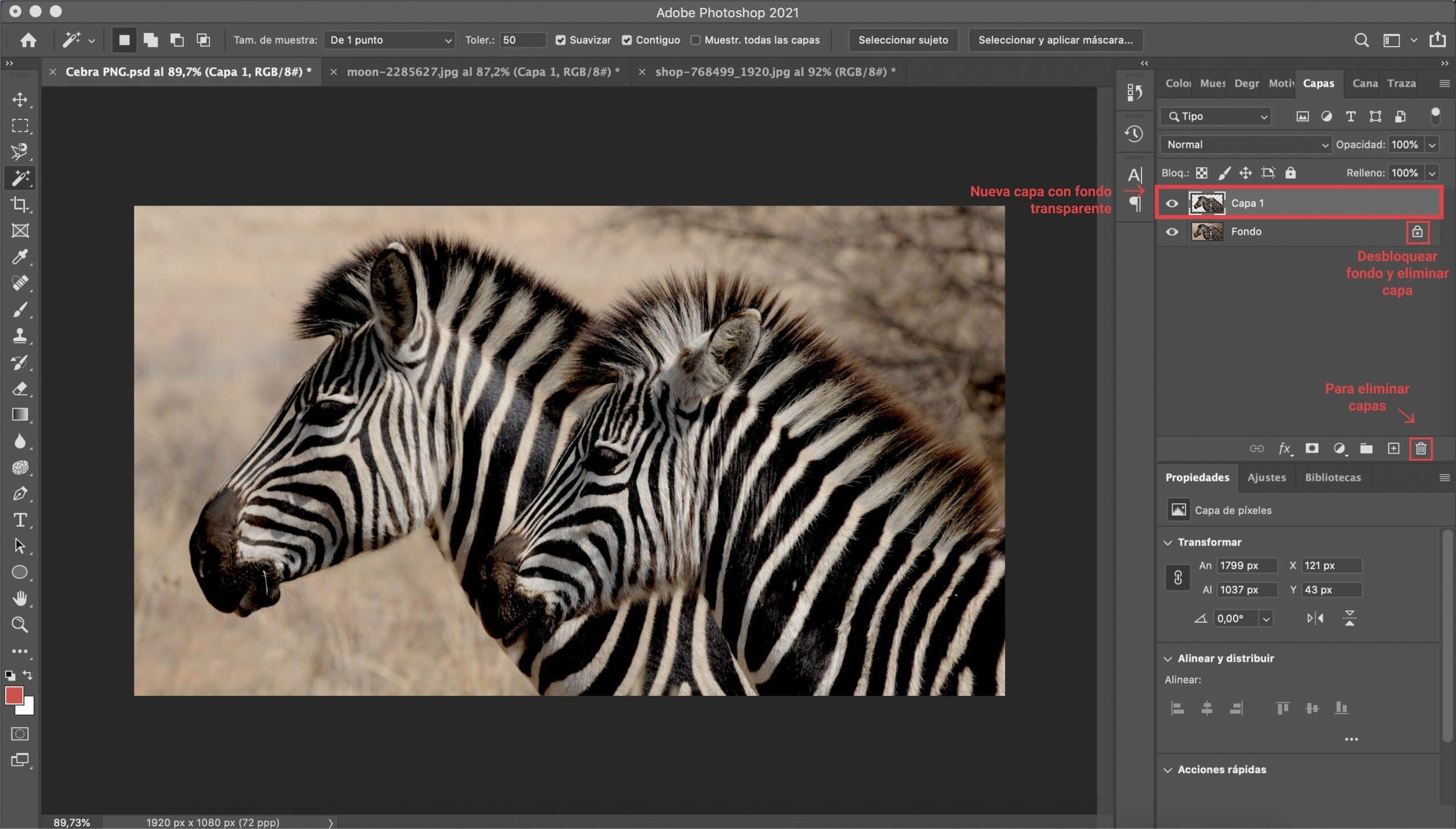 Copiar y pegar la selección para crear PNG con Photoshop