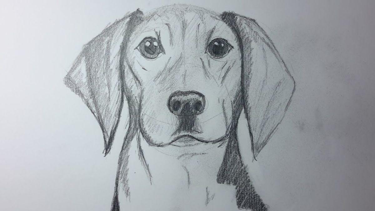 Cómo dibujar animales realistas